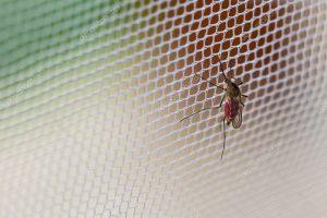 רשתות נגד יתושים: חלון ורשת